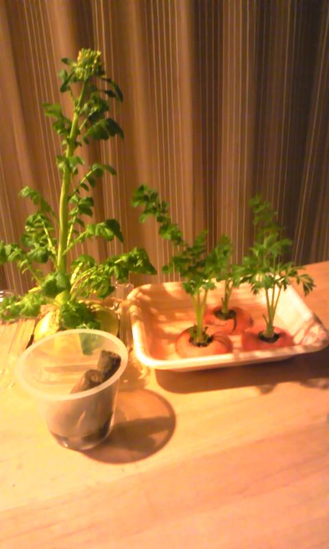 テーブル菜園
